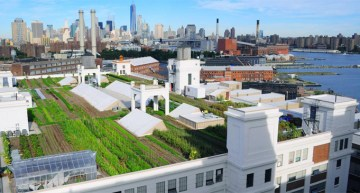 The World's Largest Rooftop Farm Sets the Stage for Urban Growth