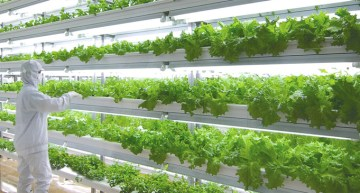 Vertical Gardening Goes High-Tech And Large-Scale