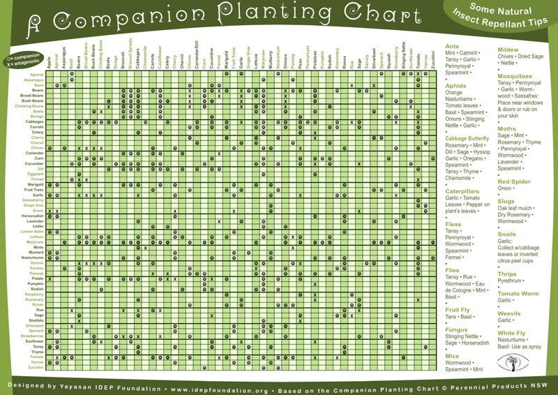 The Ultimate Companion Planting Guide  Chart
