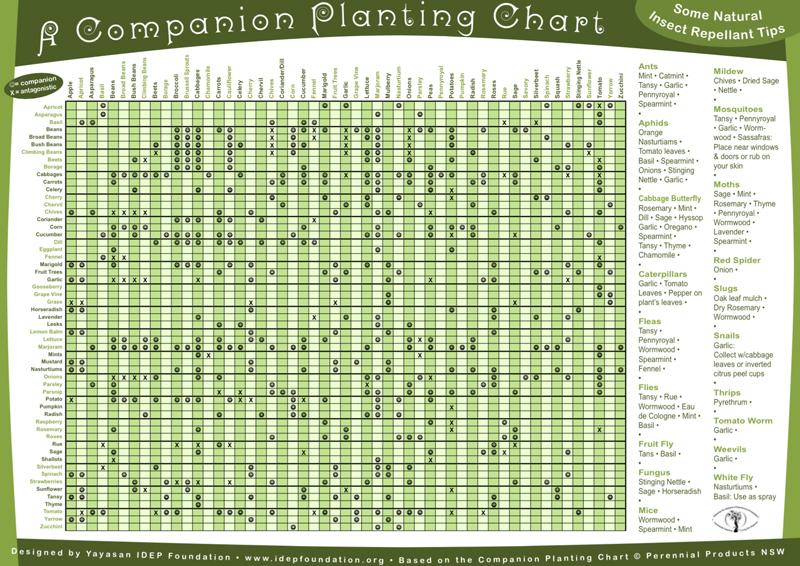 Nice IDEPu0027s Companion Planting Chart