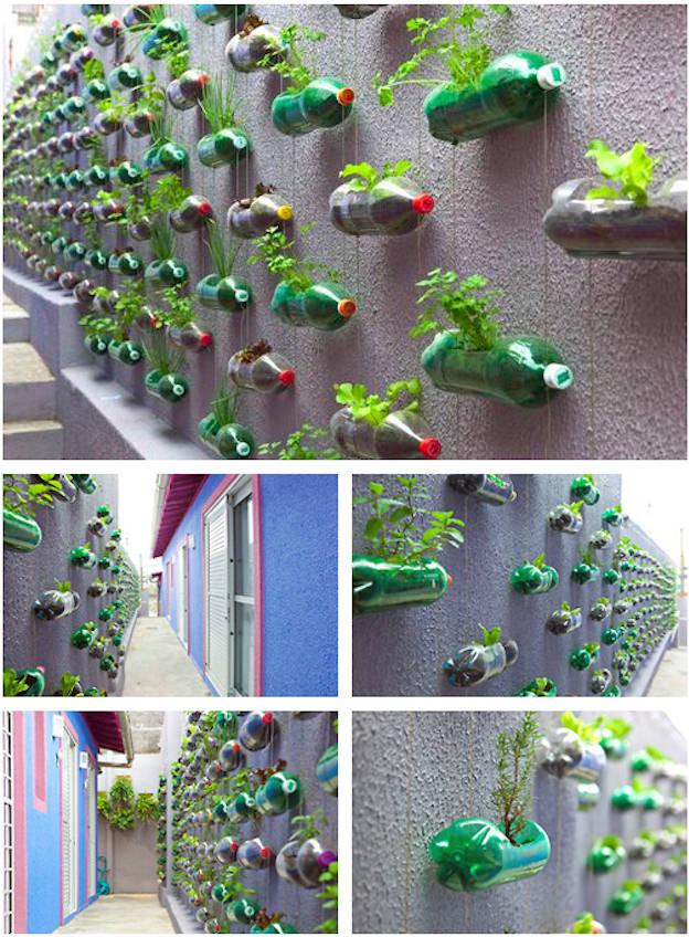 Hanging Wall Garden Part - 23: Bottle Garden