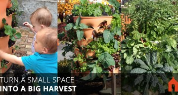 20 Vertical Gardening Ideas for Turning a Small Space into a Big Harvest