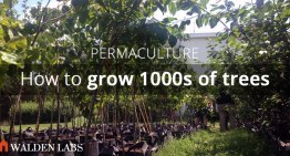 How to Start a Small Permaculture Nursery and Grow 1000s of Trees by Yourself