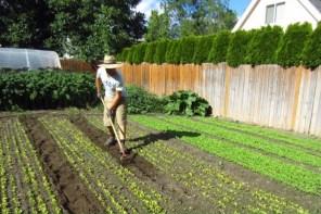 Urban Farm Tour: Making $75,000 on 1/3 acre