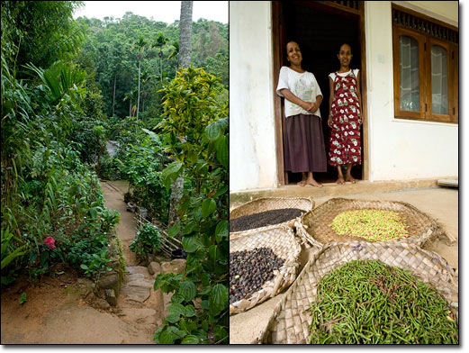 Meet these 10 basic needs relax be happy walden labs for Home garden design in sri lanka
