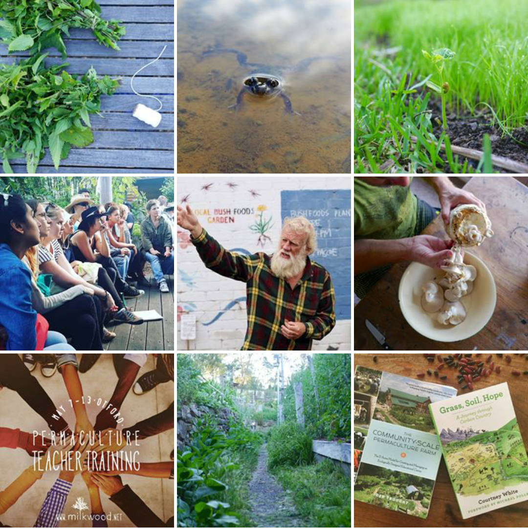 Milkwood Permaculture on Instagram