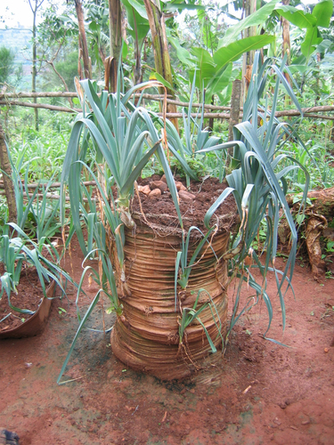 Uganda Bag Garden