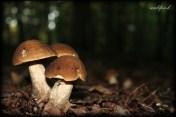 mushroom004