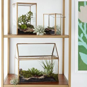 West Elm Terrariums