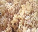Blasse Koralle