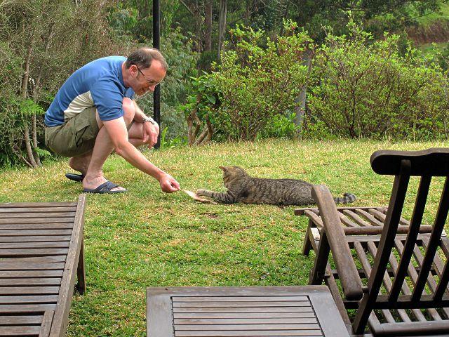 Spielen mit der Hauskatze | Waldspaziergang.org