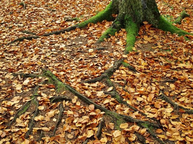 Wurzeln | Waldspaziergang.org