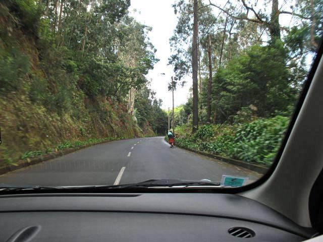 Mit dem Auto auf Madeira | Waldspaziergang.org