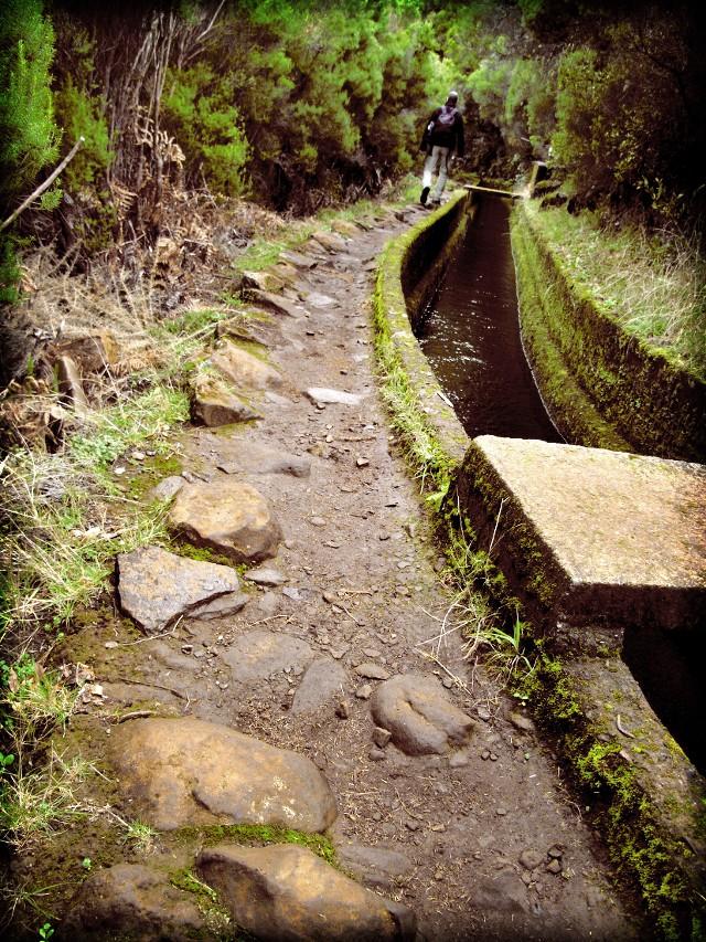 Rosmarin-Levada | Waldspaziergang.org