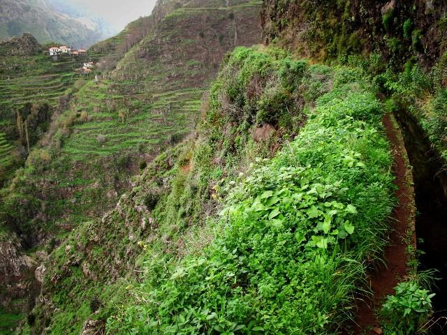Levada do Norte | Waldspaziergang.org