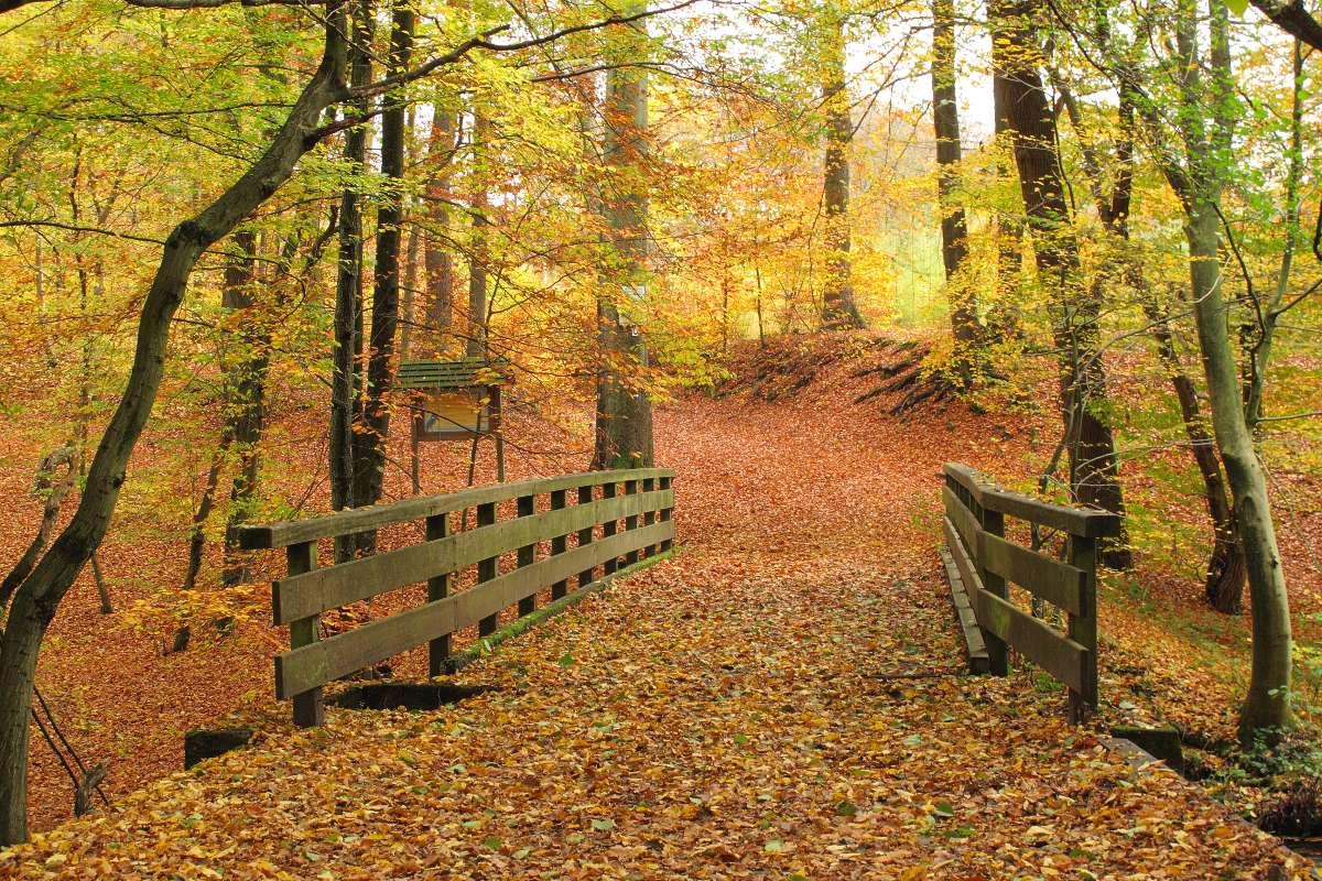 Herbst im Sachsenwald