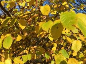 Naturerfahrungen: leuchtende Blätter im Herbst