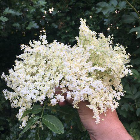 Die Jahreszeiten färben: Kamillegelb und Ginstergrau