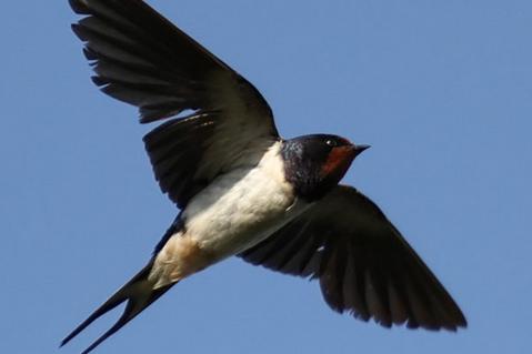 Sifat Dan Karakter Burung Walet Yang Perlu Anda Ketahui