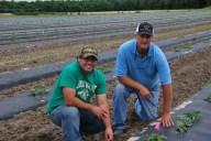 Watermelon field trials