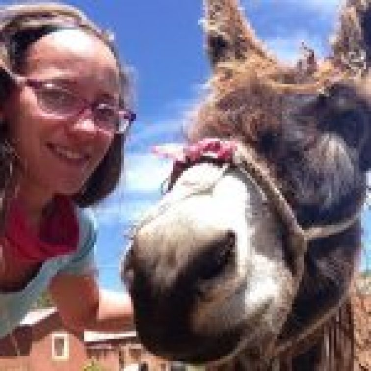 donkey at our homestay in peru