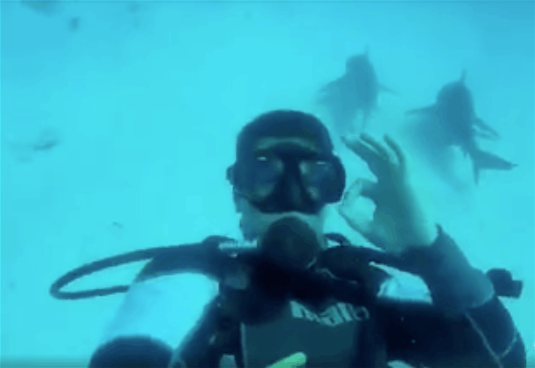 swimming with bull sharks