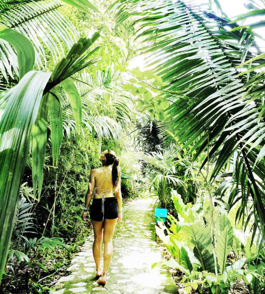 strolling through the jungle lodge hotel paths