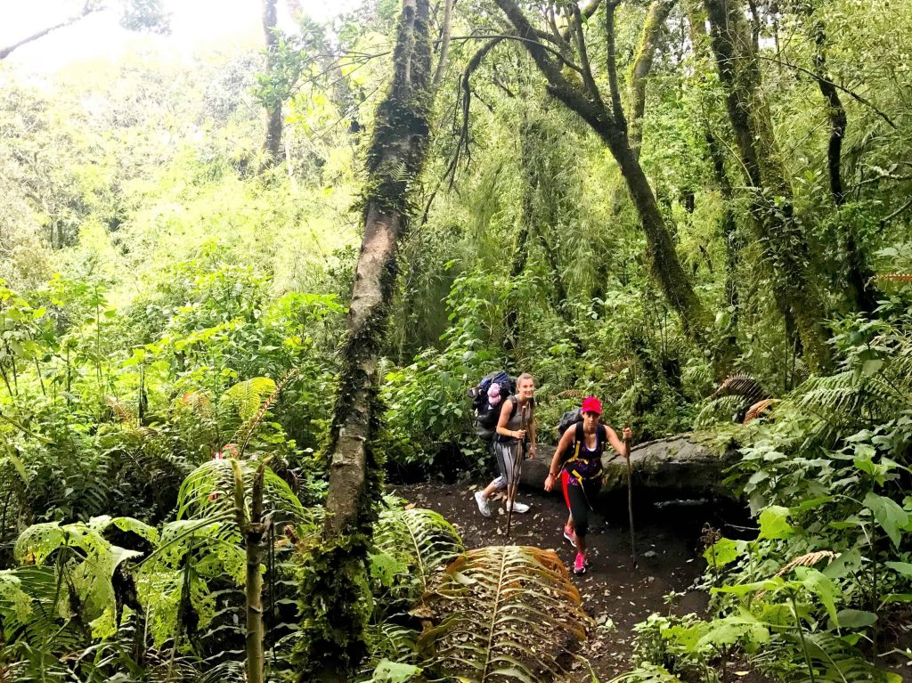 Cloud forest on Acatenango hike