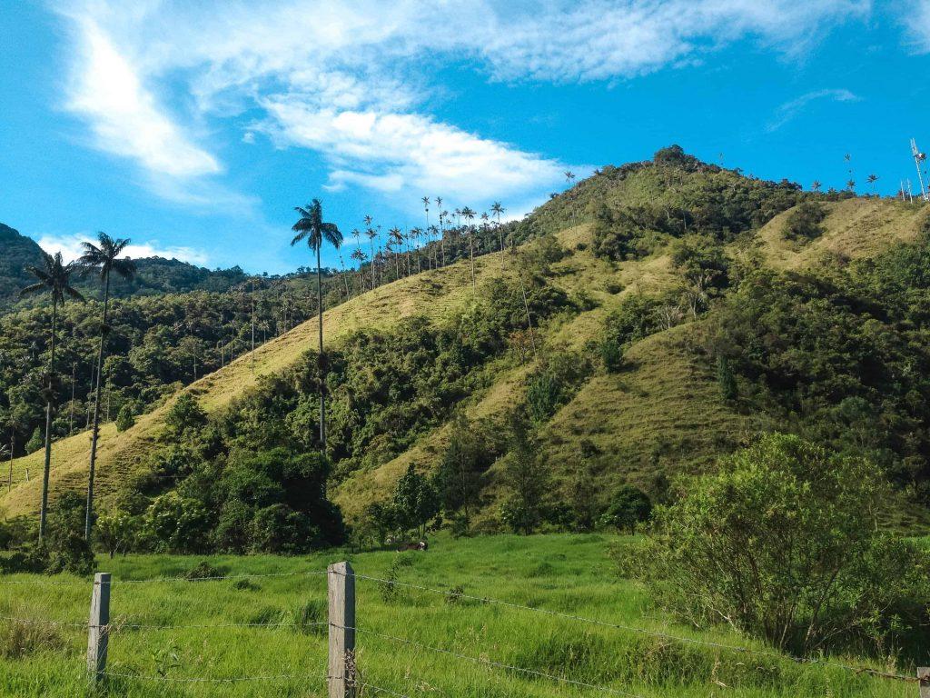 Salento colombia Cocora Valley Wax palms