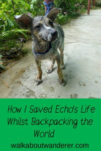 A story of how I rescued a dog in the Philippines and stopped travelling for a while to care for him. Keywords: Travel, Travelling, Blogger, Walkabout wanderer, saving a dog, rescue