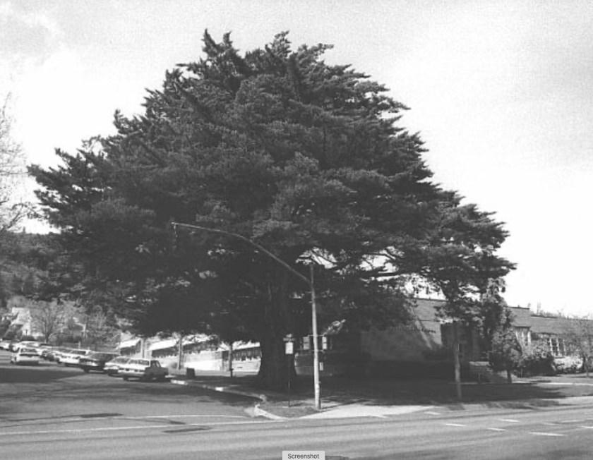 Ashland Tree of the Year 1988