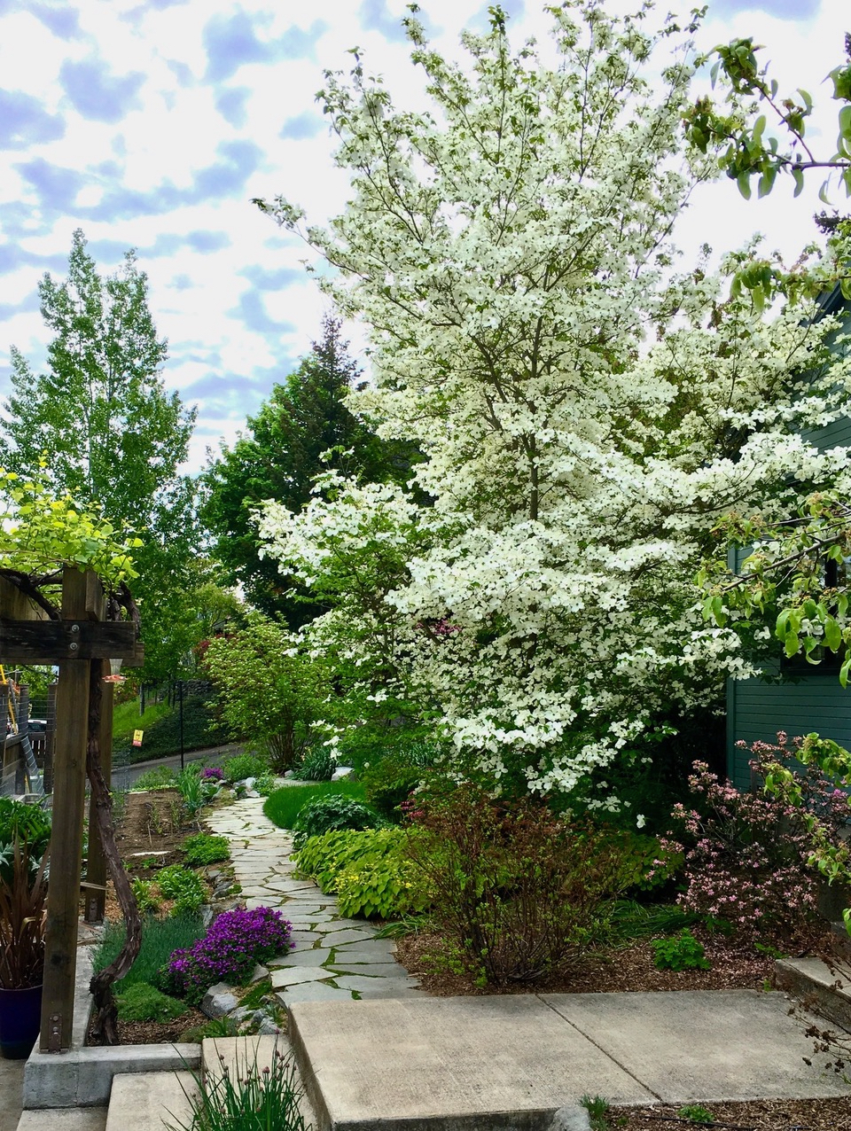 Forest Street and May 2020 Garden of the Month