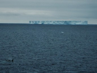 Tabular iceberg in the Antarctic Sound (B2 Killer Whale in foreground)