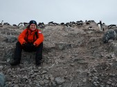 Gentoo Penguin colony on D'Hainaut Island