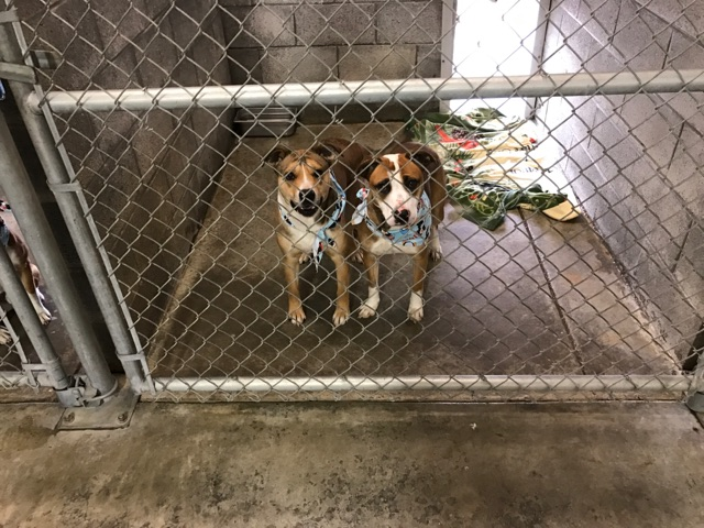 2 Dogs at the Animal Shelter