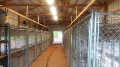 Inside training kennel building