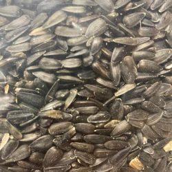 Black Oil Sunflower Seed