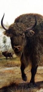 Bison_ill