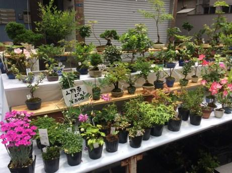 Plants Market in Asakusa