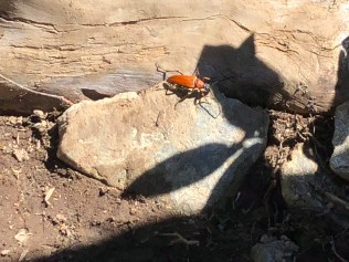 What is this insect?