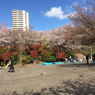 flower viewing in Asukayama Park