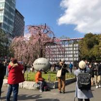 Cherry Blossoms in Ueno Park