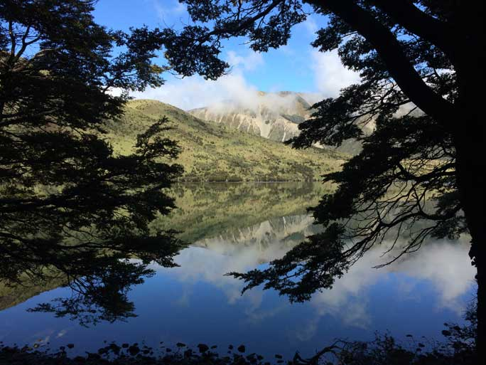 South Island Walking Safari
