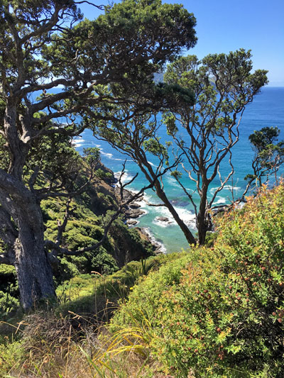 Great Barrier Island with Walking By Nature