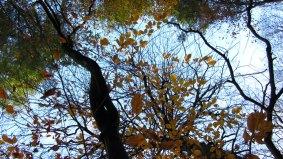 Autumn At Dunmore Wood Durrow