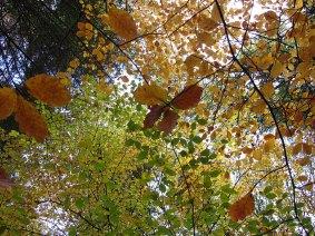 Autumn On Durrow's Leafy Loop