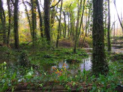 Dunmore Wood Flood Durrow