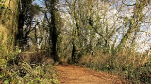 Dunmore Wood Durrow