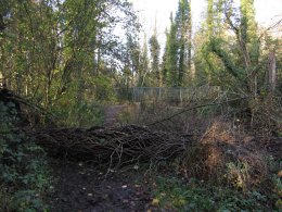 Tree across walkway on riverbank - Dunmore Wood Durrow.