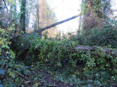Storm Damage on riverbank walk.
